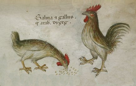 Medieval Recipes: Meat of Cyprus (1430)