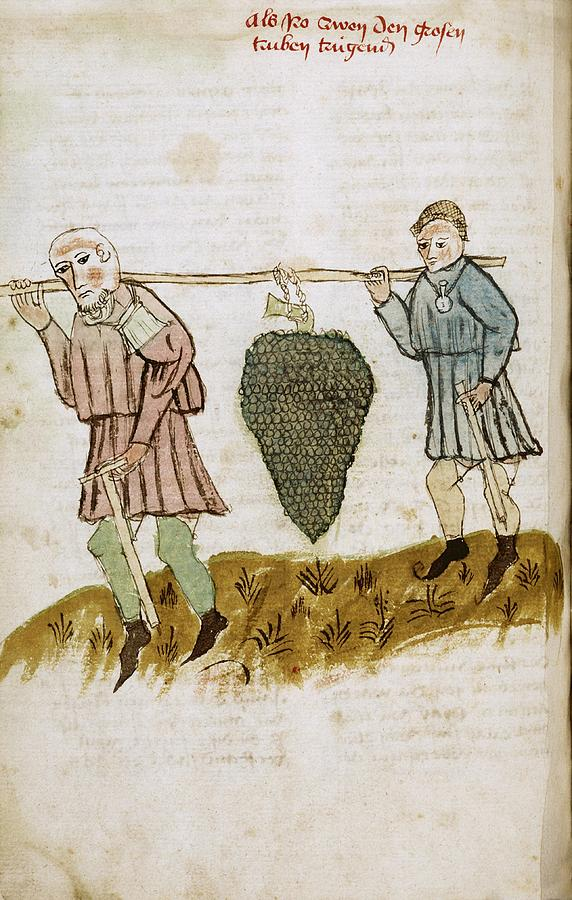 Medieval Farm Workers - Medieval manuscript with an image depicting labourers on a farm.
