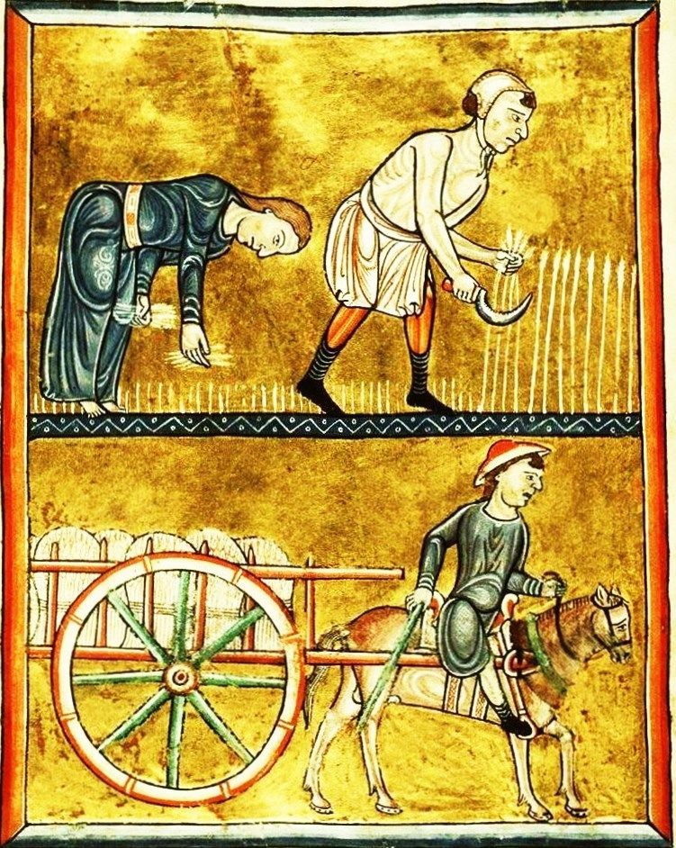 This full-page miniature showing people reaping corn, gleaning, harvesting is from folio 8v of the Fécamp Psalter representing the month of August in the calendar.